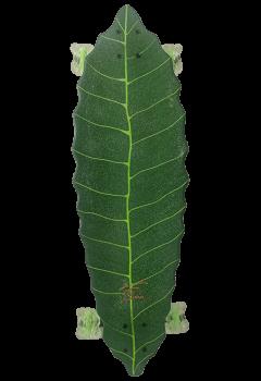 leaf green export display (1)